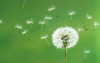 Reattività crociata tra pollini e cibi.